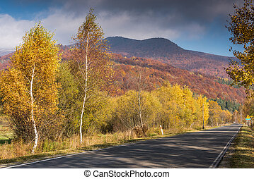 Empty road in wilderness of Carpathia Mountains, Poland