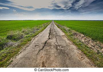 Empty road through a wheat field
