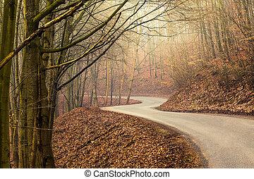 Empty road through forest in autumn