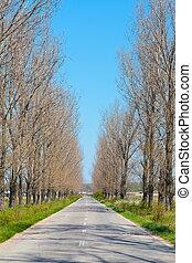 Empty road through trees