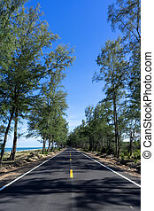 Empty road with pine trees and blue sky.