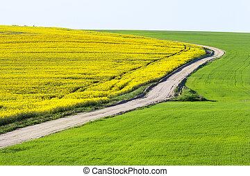 Empty rural road