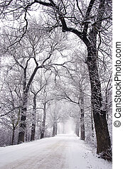 empty rural winter road with tree alley and fog