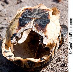 Empty Shell of a dead tortoise lying upside down