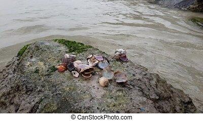 Empty shells of sea shellfish on rock On coast of Persian...