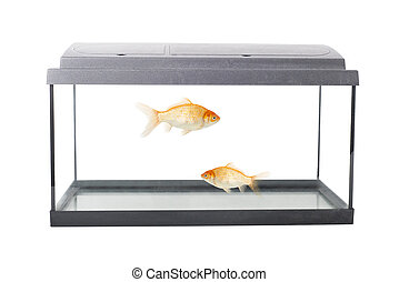 empty squared fish tank - isolated empty fish tank with ...