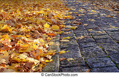 Empty stone sidewalk with leaves on side