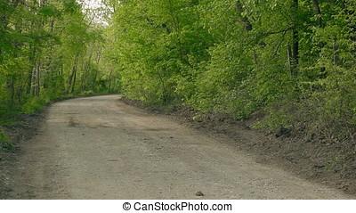 Empty Wood Dusty Road - Empty wood gravel dusty road.