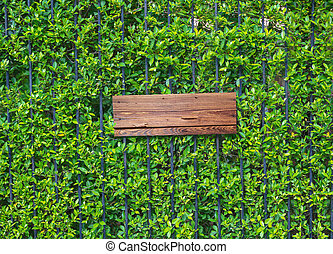 Empty wooden banner on ivy wall