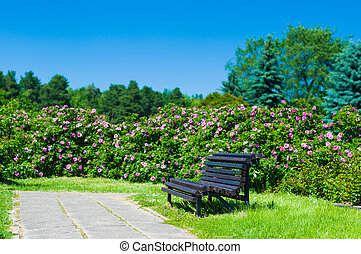 Empty wooden park bench on a sunny day