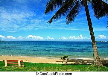 emty, sedia, e, palma, su, spiaggia