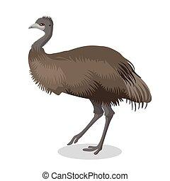 Emu bird full length portrait isolated on white background...