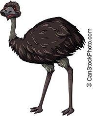 Emu bird on white background illustration