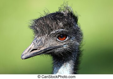 Emu Bird Portrait