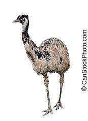 EMU, blanco, aislado, Plano de fondo