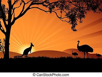 emu, canguro, ocaso