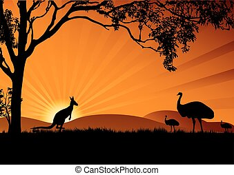 emu, canguru, pôr do sol