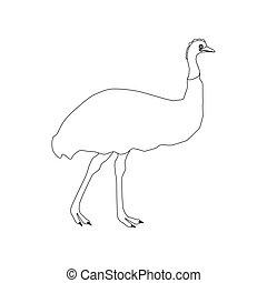 emu, contorno, avestruz