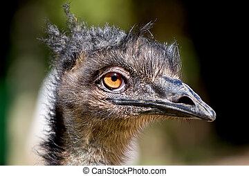 emu, dreadlocks