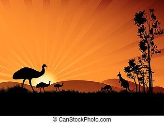 emu, em, pôr do sol