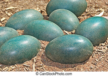 emu, huevos, verde, suciedad