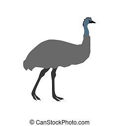 emu, ilustración, avestruz
