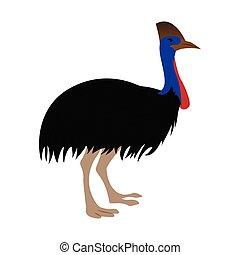 emu, lindo, aislado
