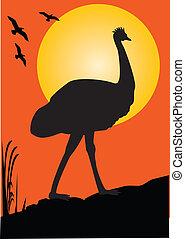 Emu Orange Sunset - one emu as a silhouette orange...