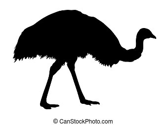Emu - Vector illustration of emu silhouette