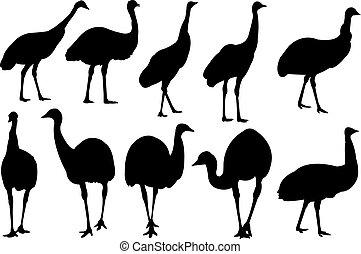 emu, vector, silueta, ilustración