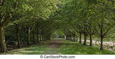 en, aveny, i, træer