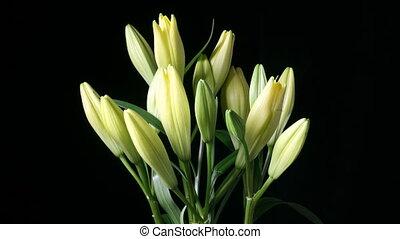 en, bundtet af, liljer, blooming