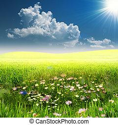 en, el, meadow., verano, natural, paisaje, woth, espacio de...