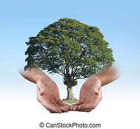 en, el, seguro, manos, de, un, cirujano de árbol