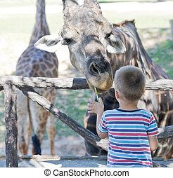en, el, zoo
