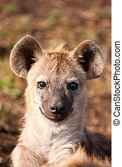 en, hyena, att ligga besegrar, se, och, iaktta, ung