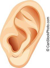 en, menneske øre, på hvide, baggrund
