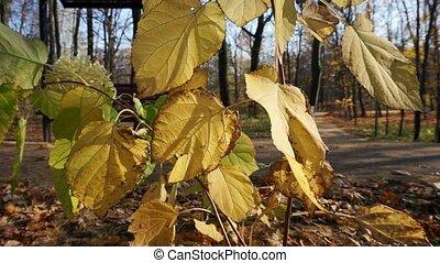 en mouvement, doré, park., souffler, pittoresque, vent, par...