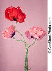 en, röd, och, två, rosa, vallmo, blomningen, på, a, rosa...