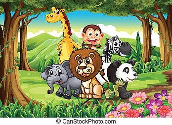 en, skov, hos, dyr