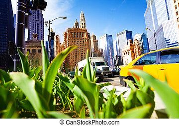 en ville, ville, parterre fleurs, closeup, chicago