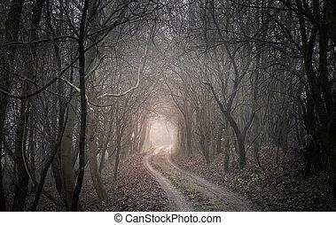 encantado, floresta