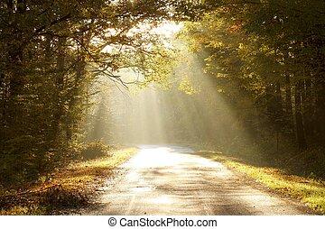 encantado, floresta outono, em, alvorada