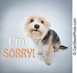 encantador, perro, perdón, mendigue