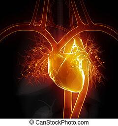 encendido, corazón, con, órganos internos