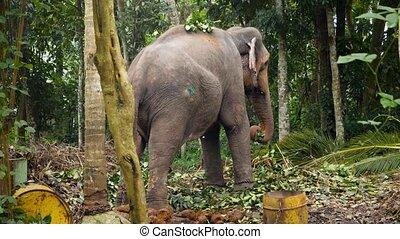 enchaîné, vidéo, éléphant, jungle, 4k, forêt, arbre, ...