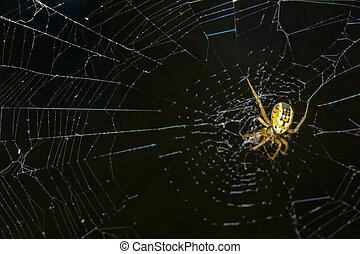 enchaînements, araignés, jaune, milieu