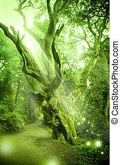 enchanté, forêt