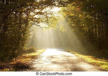 Enchanted autumn forest at dawn - Country road leading ...