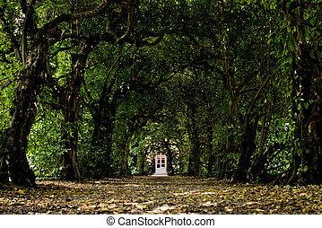 door in a tunnel of trees